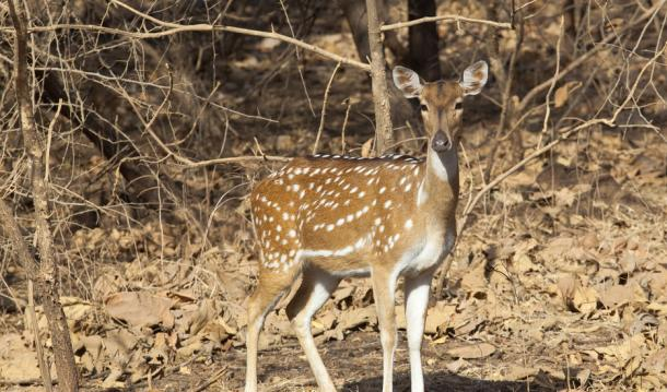 FASCINATING GIR AND BHUJ- WILDLIFE